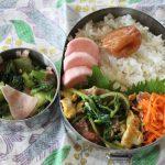 豆苗と豚肉の卵炒め弁当とマリリンデニム冷えとりコーデ。